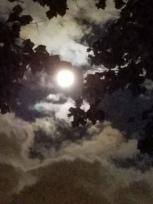 dark night harvest moon 2