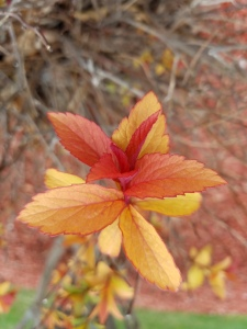 red leaves 042519